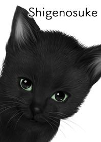 しげのすけ用可愛い黒猫子猫