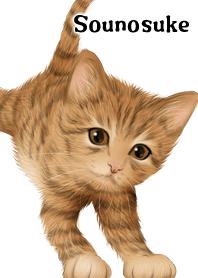 そうのすけ用可愛い虎猫子猫