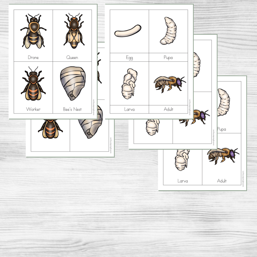 Little Learners Print Amp Go Activity Kit Honey Bee Life Cycle