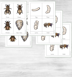 Little Learners Print \u0026 Go Activity Kit: Honey Bee Life Cycle [ 1080 x 1080 Pixel ]