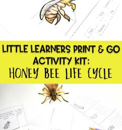 Little Learners Print \u0026 Go Activity Kit: Honey Bee Life Cycle [ 1200 x 735 Pixel ]