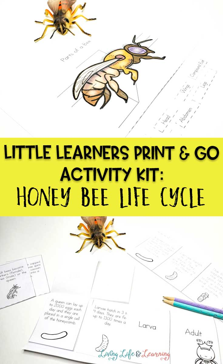 hight resolution of Little Learners Print \u0026 Go Activity Kit: Honey Bee Life Cycle
