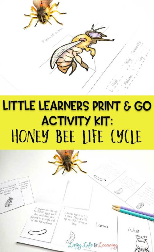 small resolution of Little Learners Print \u0026 Go Activity Kit: Honey Bee Life Cycle
