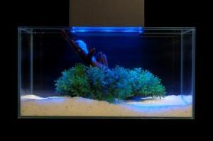 discount kitchen table sets diy refinish cabinets fluval edge 6 gallon led aquarium | my