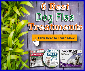 6 best dog flea treatments