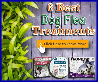 6 best dog flea treatments