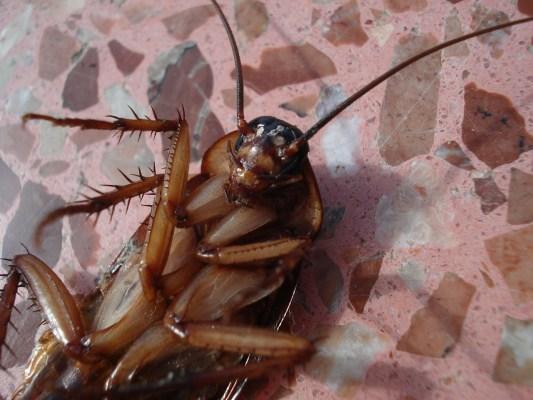 Mittel gegen Insekten