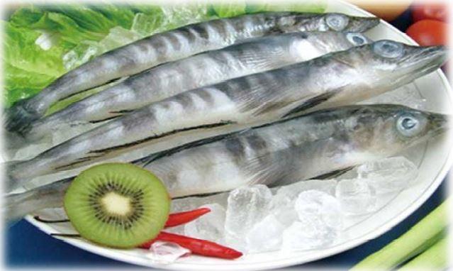 【南極】南極冰魚 – TouPeenSeen部落格