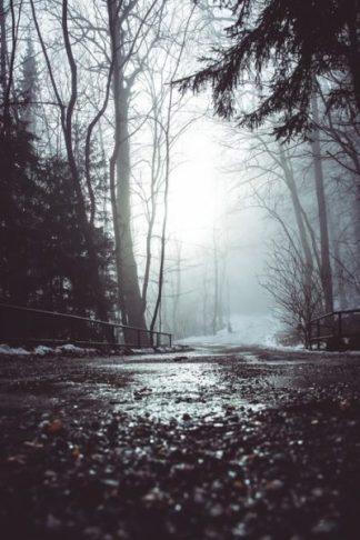 Mystic Woods - Get Your Print