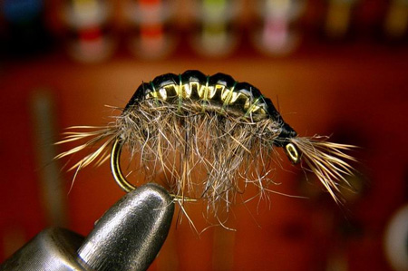 Tying Tungsten Body Gammarus Step by Step