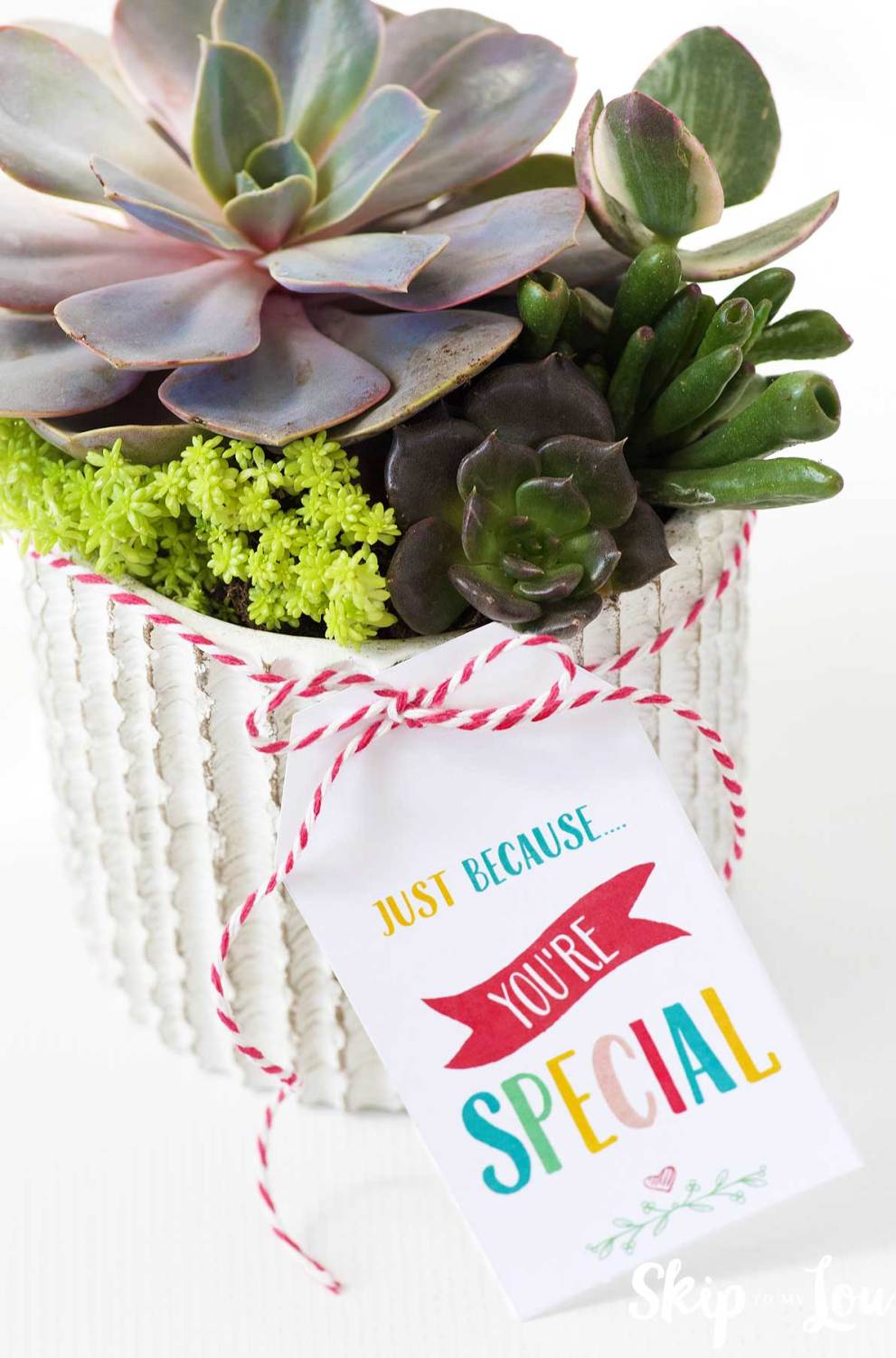 succulents in pot with gift tag