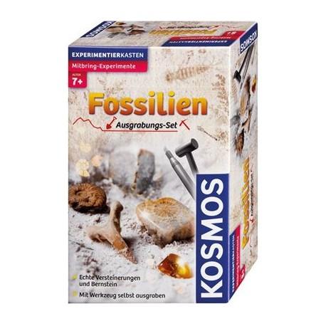 Fossilien | Kosmos