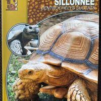 La tortue sillonnée: Centrochelys sulcata