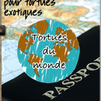 Guide de maintenance pour tortues exotiques