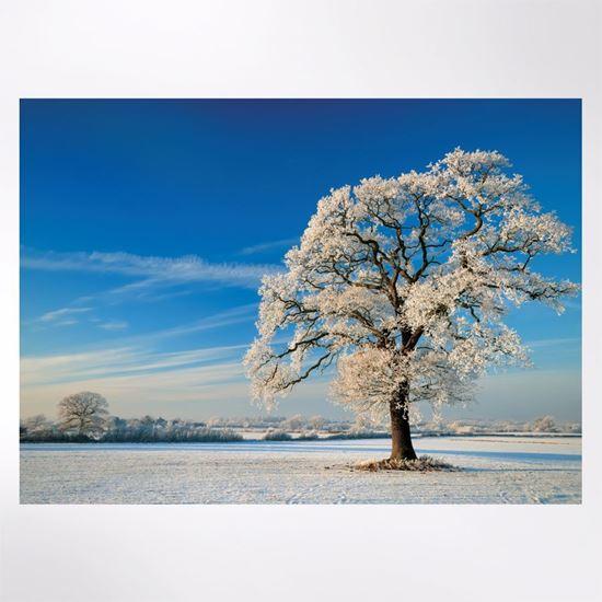 Winter Tree Christmas Cards Woodland Trust Shop Woodland Trust Shop