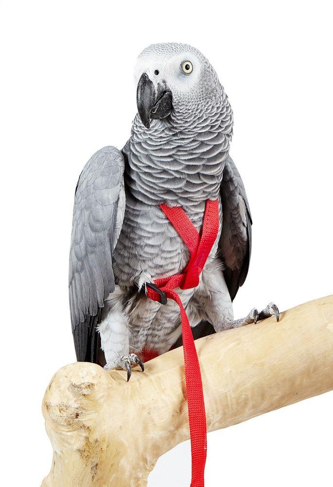 World Of Birds Aviator Harness Amp Leash