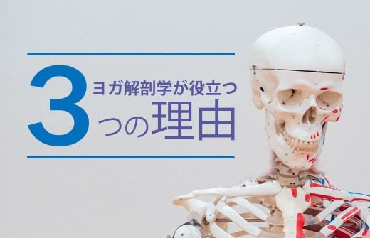 解剖学が役立つ3つの理由