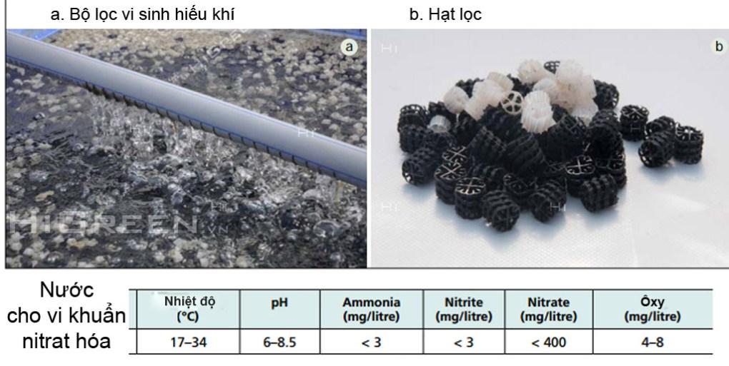 Chương 2: Kiến thức về Aquaponics Vật liệu lọc