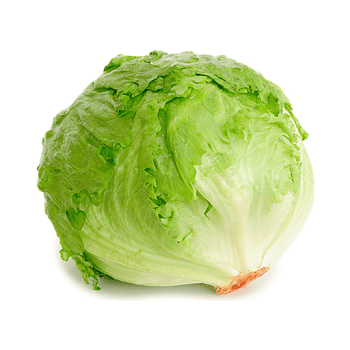 Fresh Vegetables Lettuce – Iceberg [tag]