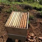 Open Beehive