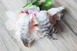 Daze & Amaze Feather Bohemian Earrings