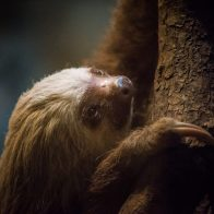 Chloe the Sloth by Jackie Scherer