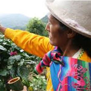 Koffiebonen Peru Chanchamayo 250 gram