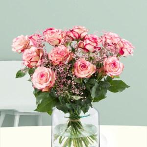 15 Rosa-Weiße Rosen mit Schleierkraut | Rosenstrauß online bestellen | Rosenversand Surprose.de