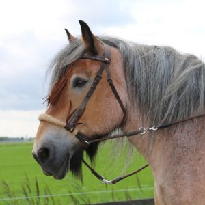 F.R.A Freedom Riding Articles F.R.A. Tinver Bitloos Hoofdstel (System 4) Zacht leren teugels Incl.