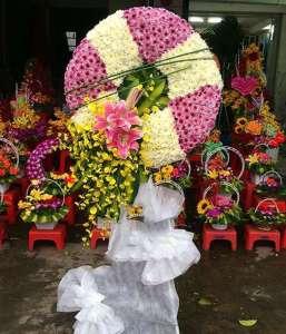 hoa tang le quan gò vấp