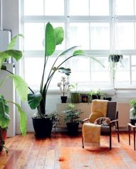 working space with green plants