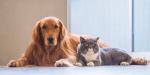 Kriser's Feeding Pets for Life, LLC