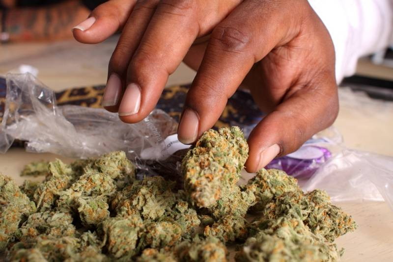 weed_buds_hand