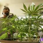 black owned cannabis