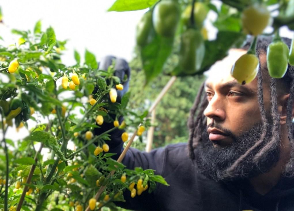 black owned pepper farm