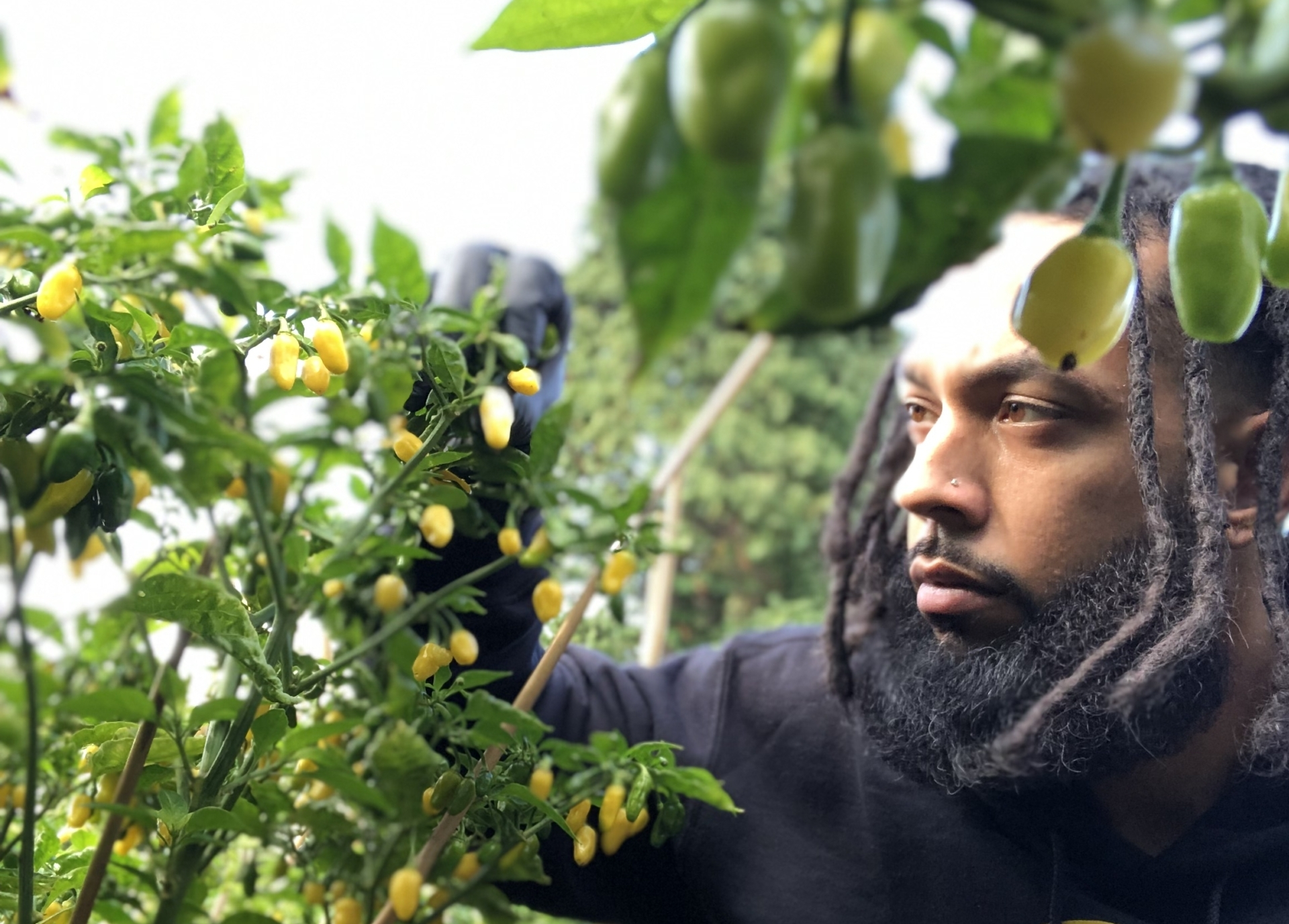 Black Owned Pepper and Spice Farm