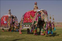 elephant festival jaipur- 2