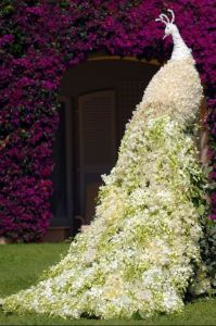You Will Probably Be The Only Person On Your Block With A Peacock Shaped Jasmine Topiary.