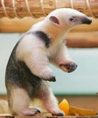 Anteater. Not always around when you need him.