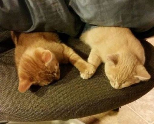 Oh, I almost forgot. Two kittens holding paws as they nap. Just because.