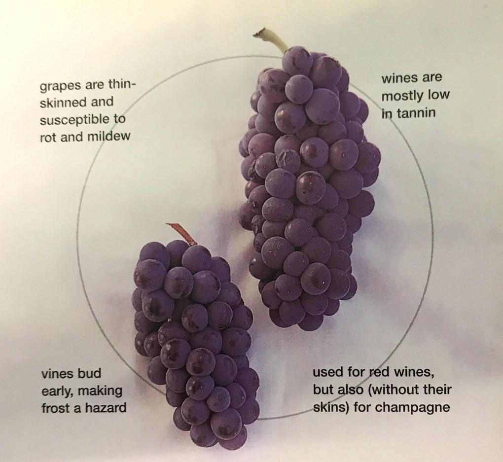 Cây nho Pinot Noir yêu cầu đất thoáng khí và thoát nước tốt để cây phát triển tối ưu. Những loại dây leo này