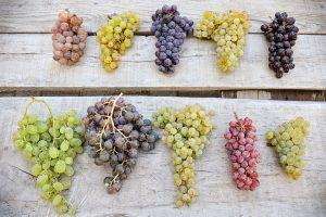 Bạn đã bao giờ tự hỏi tại sao rượu vang được làm từ nước ép nho, mà không phải, nước ép từ táo hoặc cam