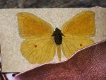 flash card art-butterfly-card-955458-1