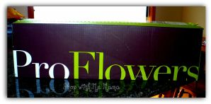ProFlowers Review