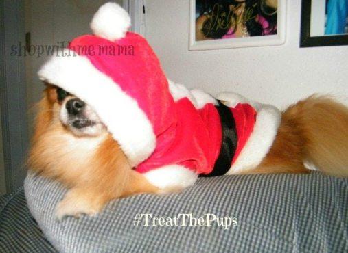 dog dressed up as santa claus