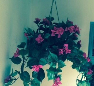 Decorating with Silk Flowers For My Home