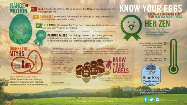 Infographic Know Your Eggs BSFF