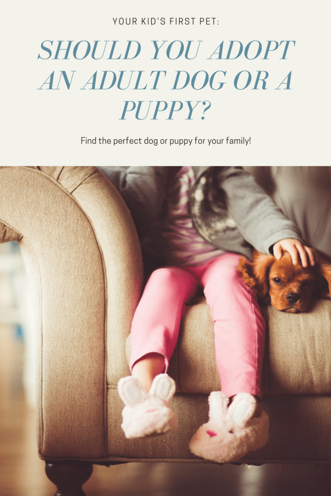 Should You Adopt an Adult Dog or a Puppy?