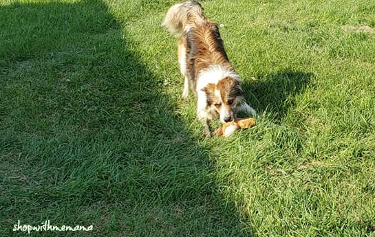 Best dogs for first time owners