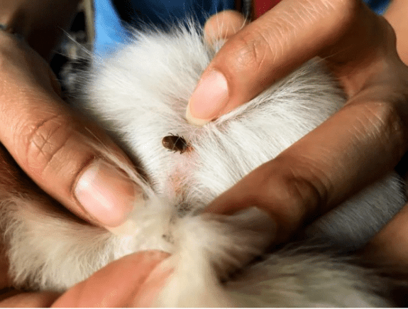 Spring Flea and Tick Prevention Tips for Dog Owners